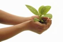 mans i planta